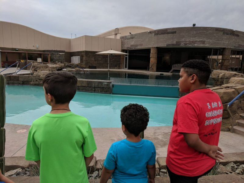 Say Hello To Our Dolphin Friends In Scottsdale AZ At Dolphinaris