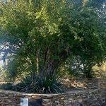Desert Botanical Gardens: A Paradise in Phoenix AZ