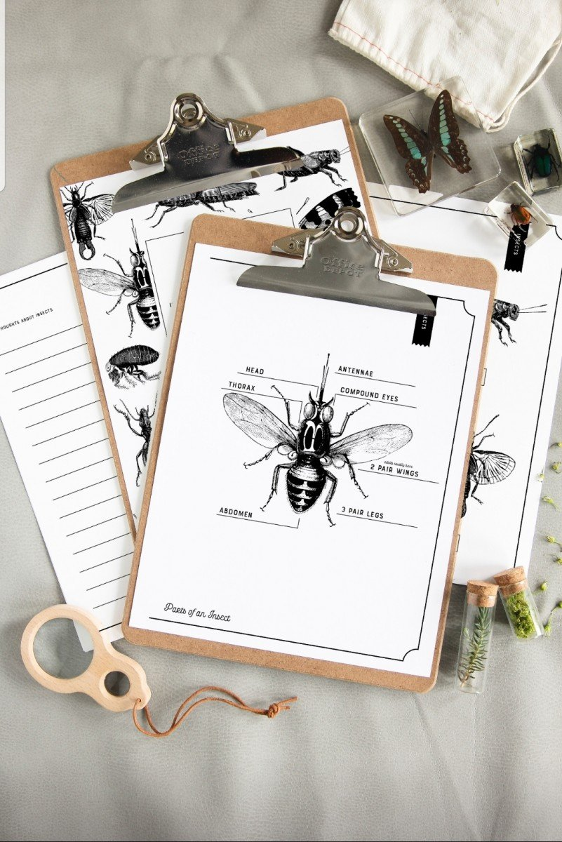 insect workbook